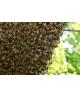 Bijenpollen Raw & Organic