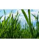 Biologische Tarwegras Poeder NZ Raw & Organic kopen online