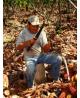 Cacao Poeder Raw & Organic