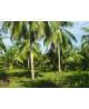 Kokosolie Raw & Organic bestellen
